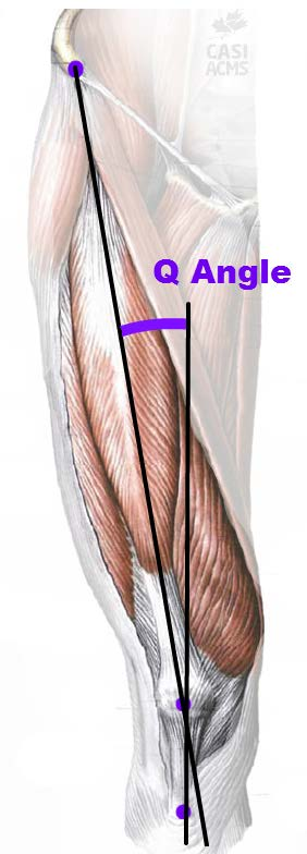 The gallery for --> Q Angle Male Vs Female